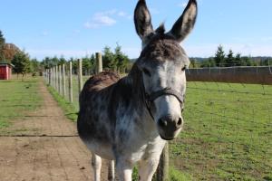 Fetus Jackson Donkey